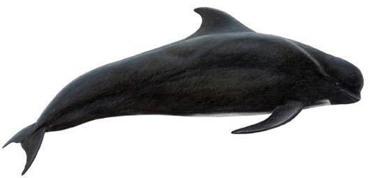 long finned