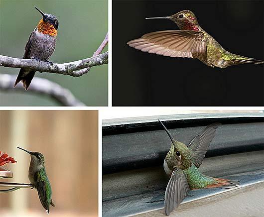 nectar wings