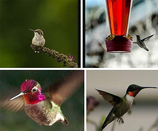 nectar close up