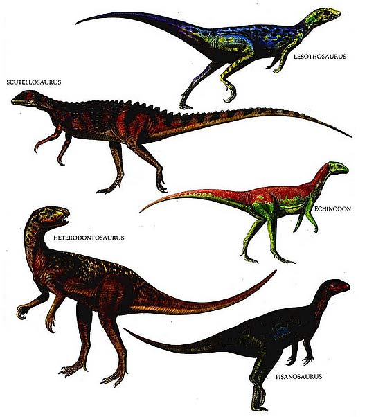 Most Dinosaur Researchers Believe That Fully Improved Locomotion Evolved Independently In Three Different Lines Of Dinosaurs The Theropods