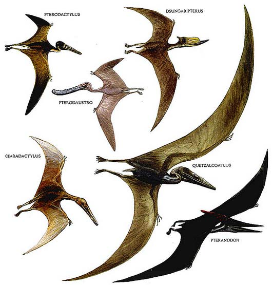 Image of: Vector Flying Types Piximus Ancient And Extinct Reptile Types The Dinosaurs Animal Pictures