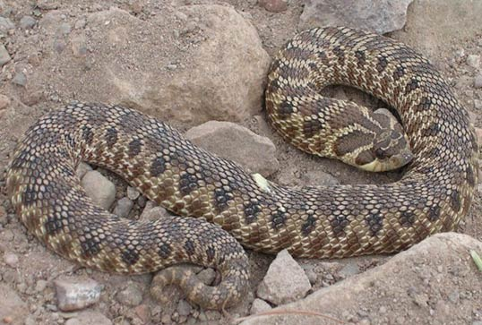 More Types of Snakes | Animal Pictures and Facts | FactZoo.com