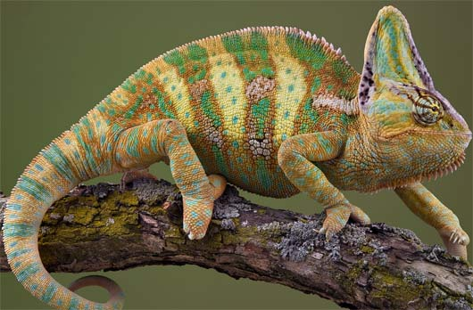 Reptiles | Animal Pictures and Facts | FactZoo.com