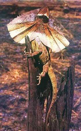satellite lizard perched
