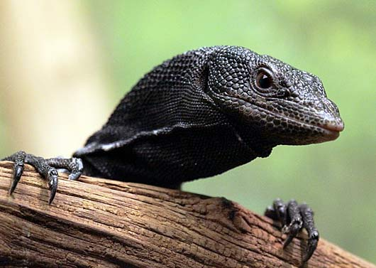 blacktree monitor head