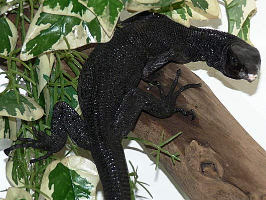 tree monitor branch