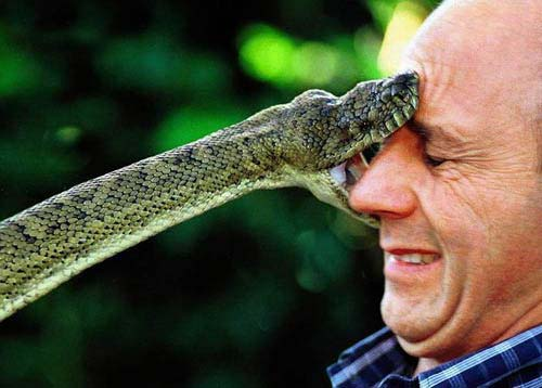 Snake Bite Ouch Animal Pictures And Facts Factzoo Com