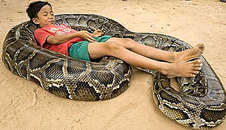 python sleeping