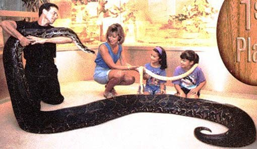 kids meeting python