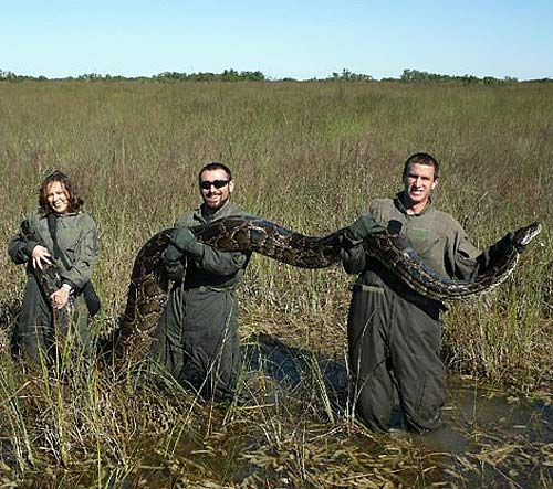 students catch python florida