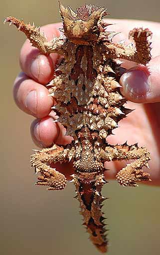 spiky underside