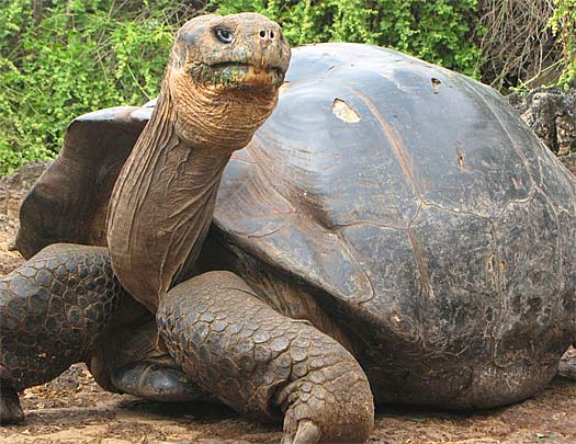 How Long Can Tortoises Live Without Food