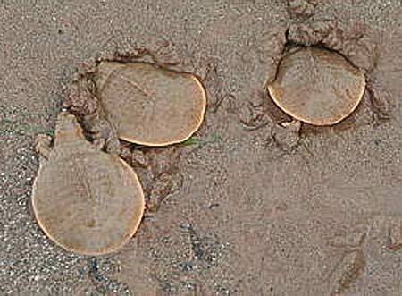 hatchlings sand