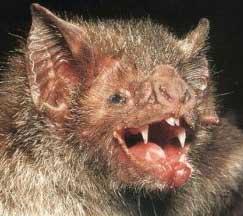 ugly bat